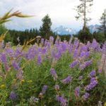 Things to do in Jackson Hole in summer - the best activities for families