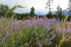 Parenthood and Passports -Summer in Jackson Hole