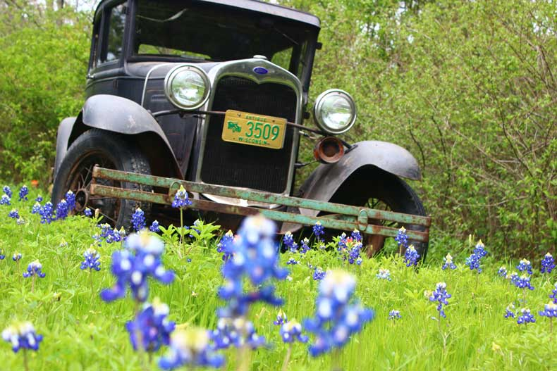Ennis Bluebonnet Trails photos