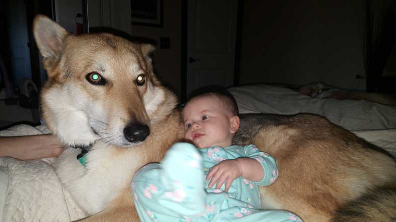 a baby's memory - baby with dog