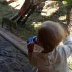 The great zoo debate – Should zoos be banned?