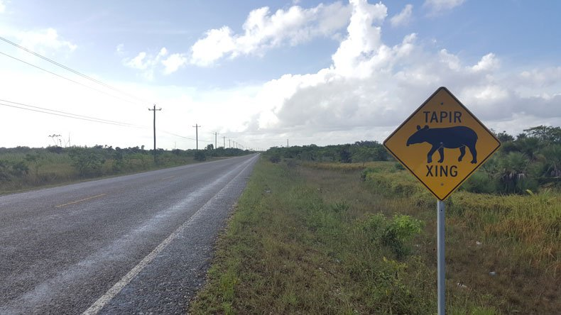 Parenthood and Passports - Driving in Belize