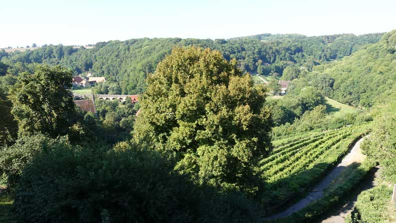 Rothenburg ob der tauber with kids - vineyards around town