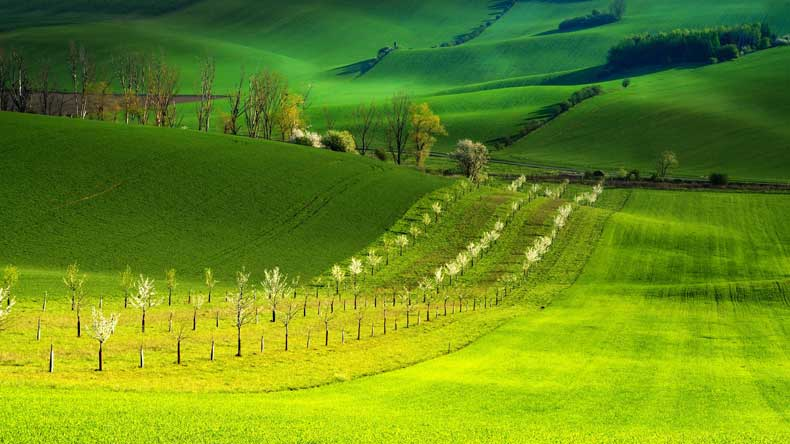 green rolling hills in moravia czech republic