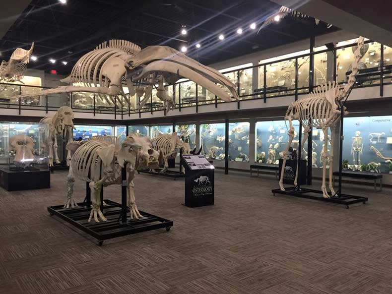 Museum of Osteology - one of the must unique things to do in Oklahoma City