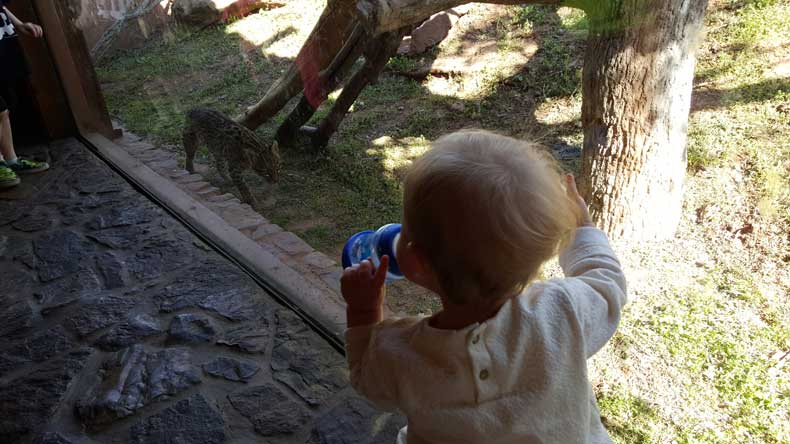 Oklahoma City Zoo - a great attraction for kids in Oklahoma City