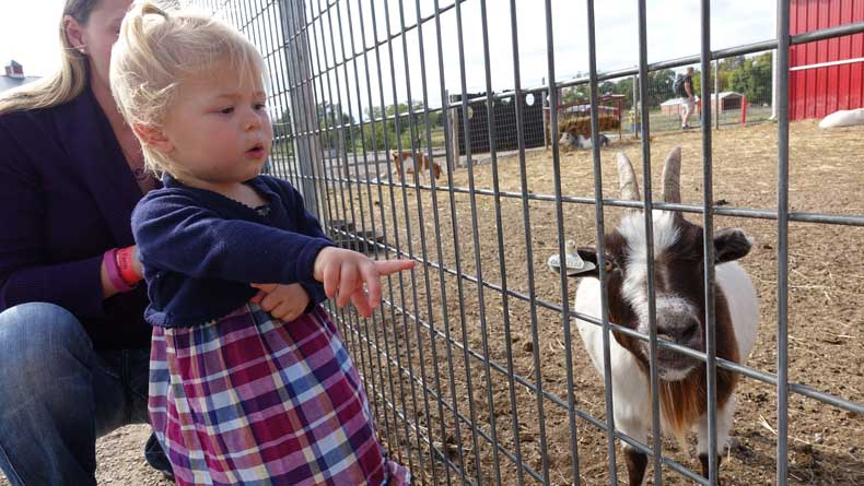 Orr Family Farm is one of the best attractions in Oklahoma City for kids