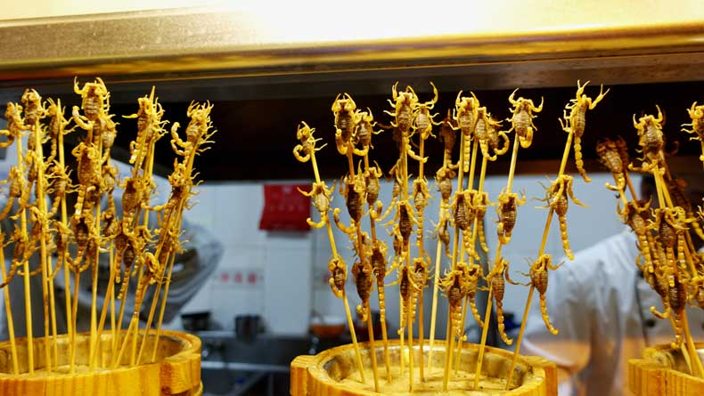 Scorpions on a stick at the Wangfujing night market