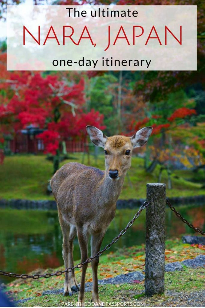 Nara, Japan is an easy day trip from Kyoto or Osaka and is one of the top places to visit in Japan. One of the most popular things to do in Nara is to watch the deer that roam freely in the streets and in Nara Park Japan. If you are planning a Nara day trip, here is a full one-day itinerary for Nara Japan. #nara #japan #travelitinerary #asia