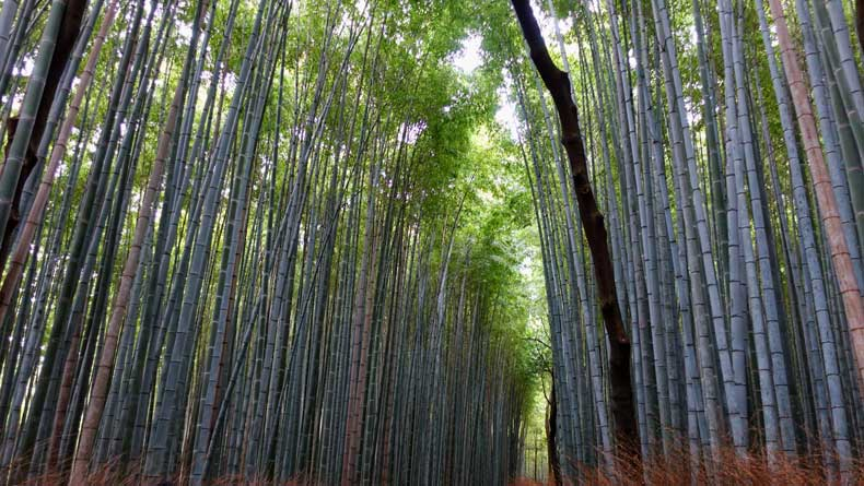 Kyoto Bamboo Grove - Ways Japan is environmentally friendly