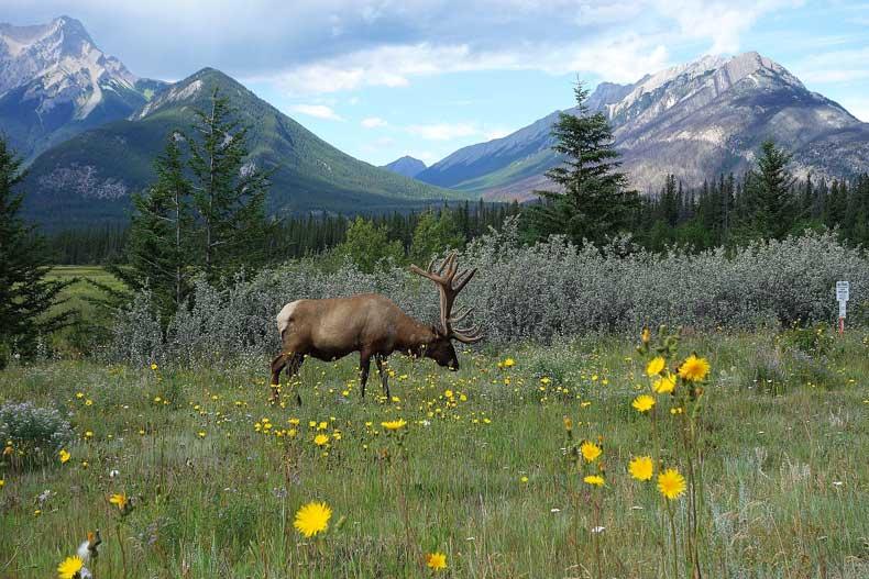 Banff activities animal watching