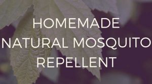 Essential-oils-mosquito-repellent