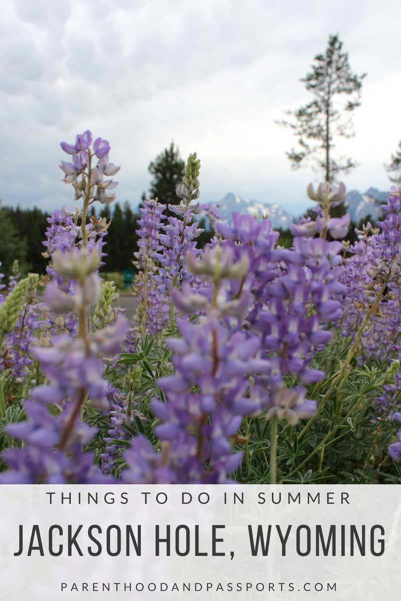 Summer in Jackson Hole, Wyoming