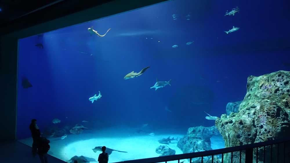 Denmark National Aquarium Copenhagen kids things to do