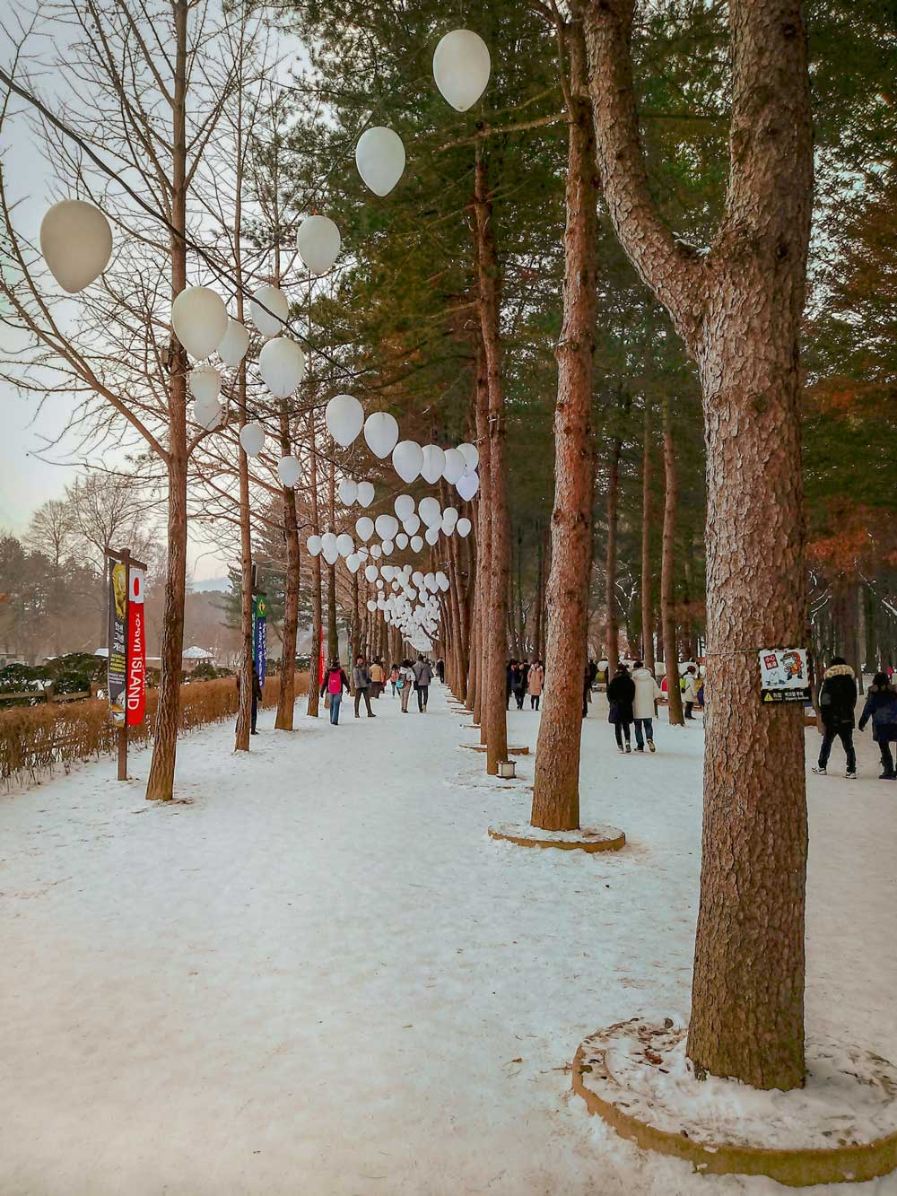 Nami Island Korea winter