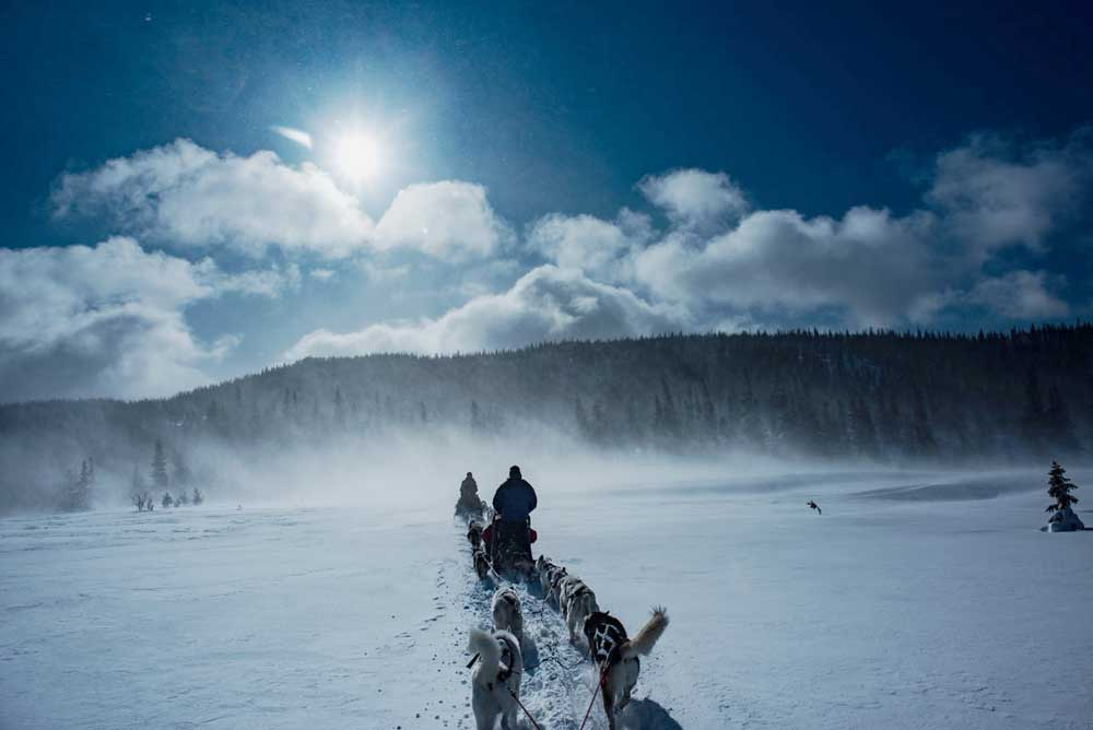 sweden are dogsledding winter paradise