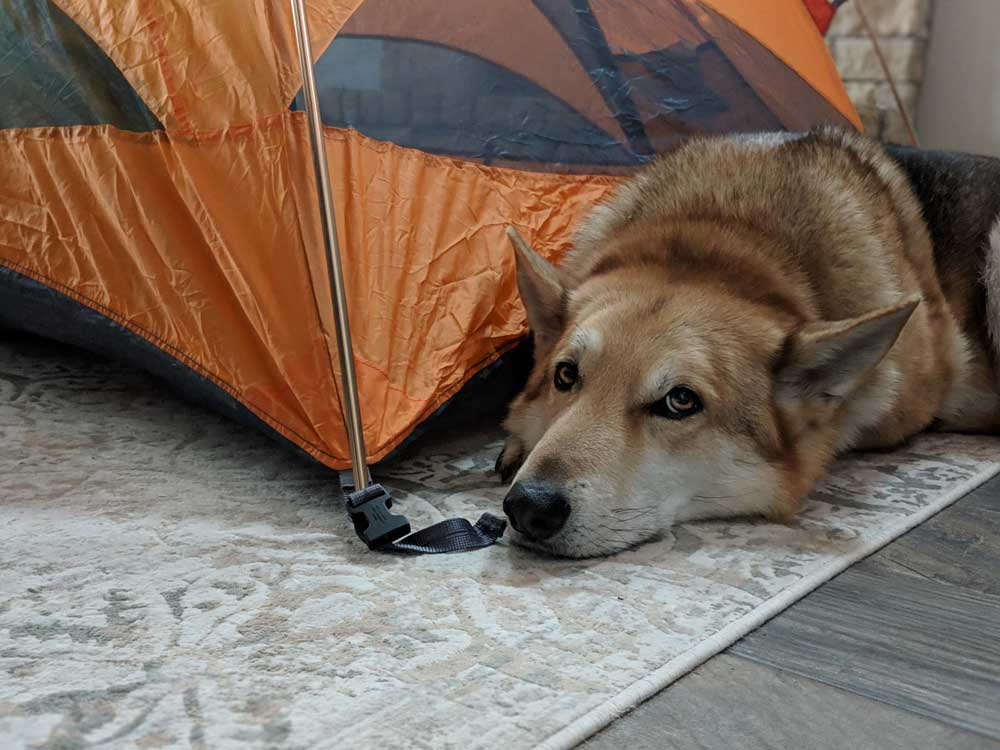 family camping tips - tent set up in living room
