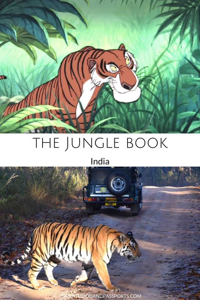 A picture from the Disney movie The Jungle Book compared to a real picture of a tiger reserve in India that inspired the book and movie