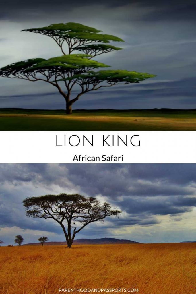 A picture from one of the places in Disney movies set in Africa like the Lion King compared to a real picture of Africa