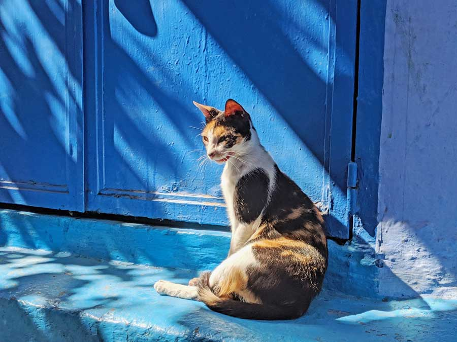 One of the many Chefchaouen cats that roam the streets.