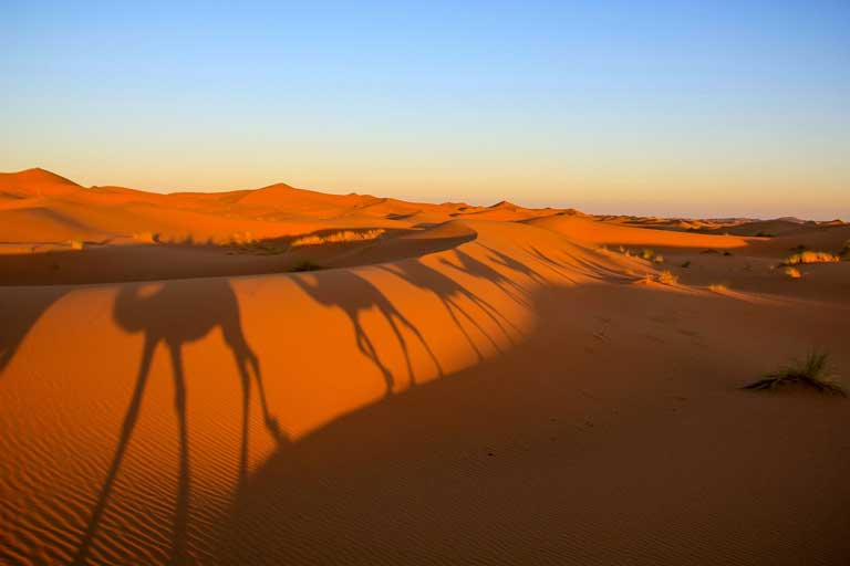 Shadows of camels on the sand of the Sahara Desert in Morocco. An interesting fact about Morocco is that the country is one of 11 countries that the Sahara Desert stretches across.