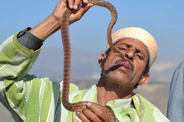 A Moroccan man holding a snake. One of the most interesting facts about Morocco is that snake charmer is a real profession.