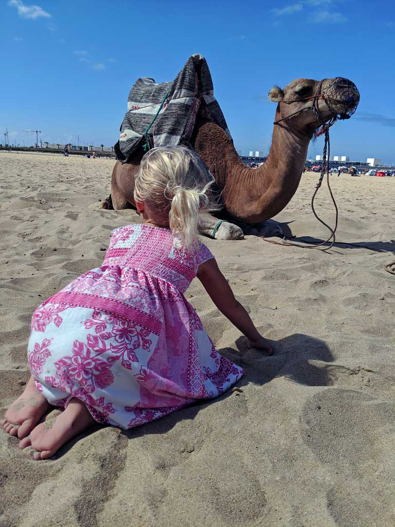 camel on a beach during a Morocco family vacation