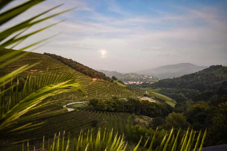 Vineyards in Basque Country, Spain