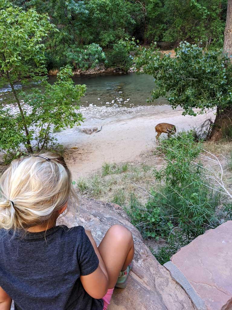 child watching a deer on Riverside Walk