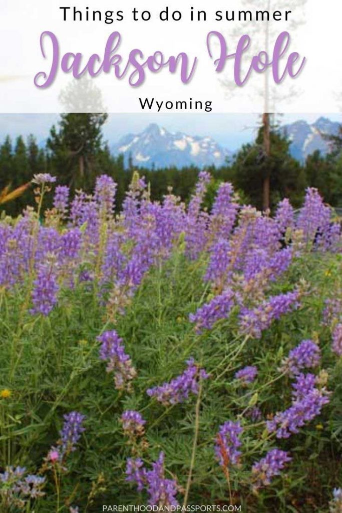 Planning to visit Yellowstone or Grand Teton National Park in summer? This guide to the best summer activities in Jackson Hole, Wyoming highlights the top things to do in Jackson Hole on a summer vacation, including the best activities in Grand Teton and Yellowstone.