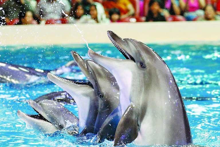Dolphin show at Dubai Dolphinarium, a family-friendly activity in Dubai.