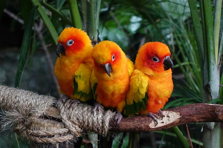 Birds of the rainforest inside The Green Planet Dubai.