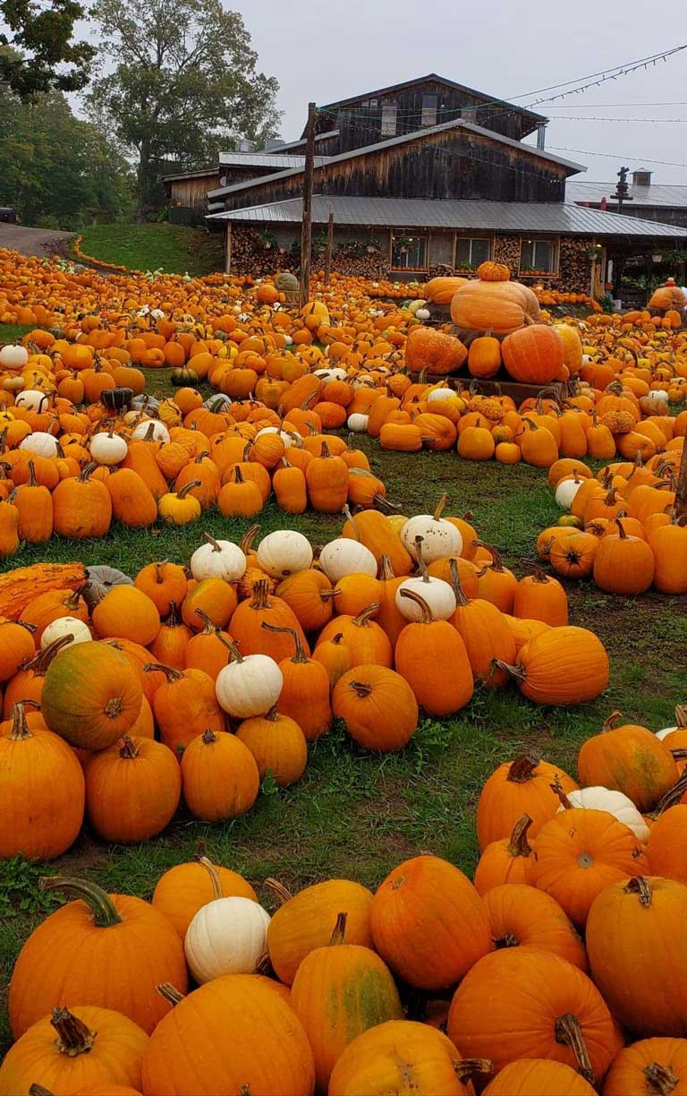 pumpkins at Pond Hill Farm, a great kid-friendly winery in the Midwest