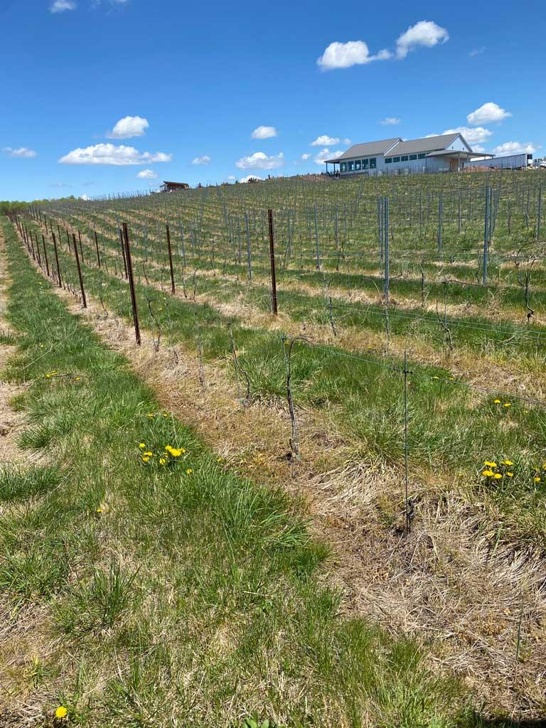 Windridge Vineyards in Maryland