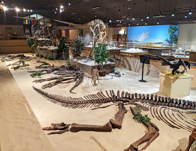 Badlands Dinosaur Museum - one of the best things to do in Dickinson ND