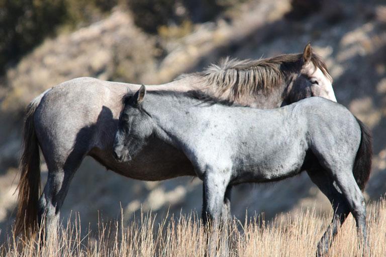 wild horses in Theodore Roosevelt NP